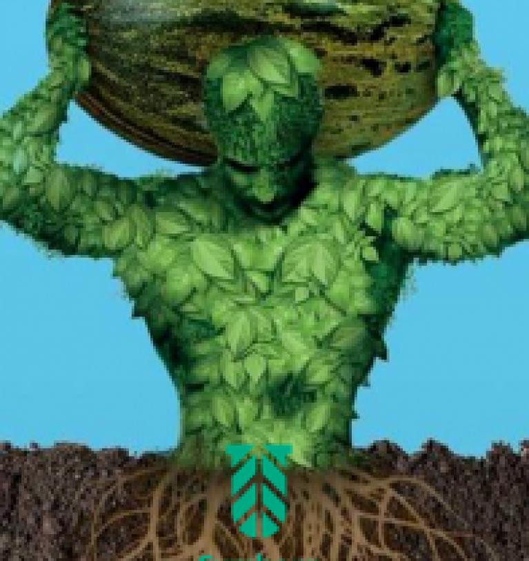 Symborg mejora un 28% el rendimiento  medio por planta en el cultivo de melón