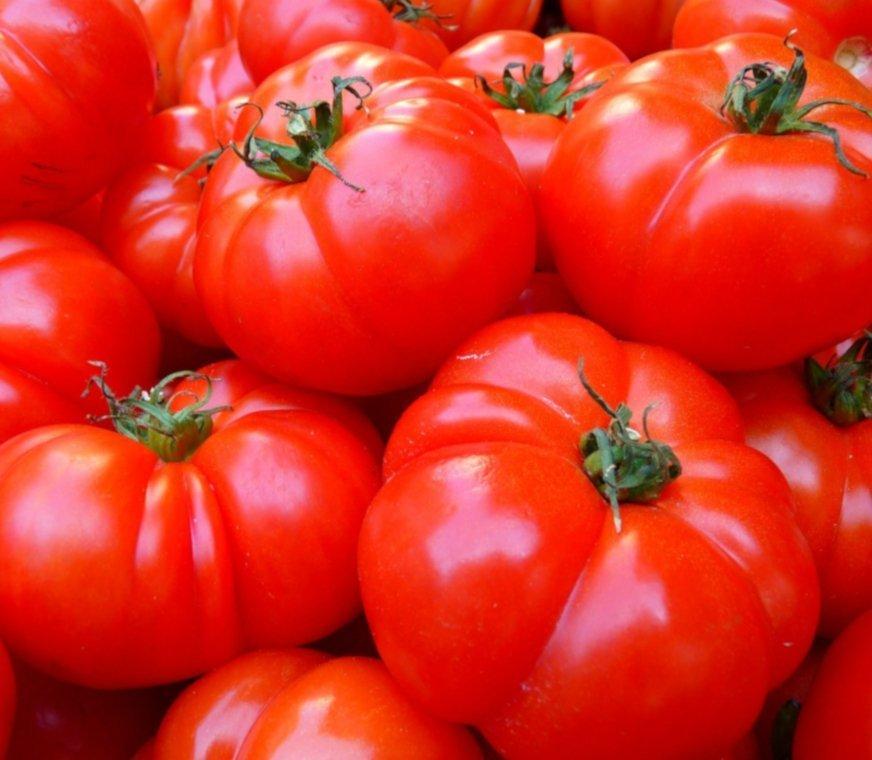 Trichosym-tomates.jpg