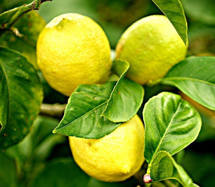 Vitasoil-limones.jpg