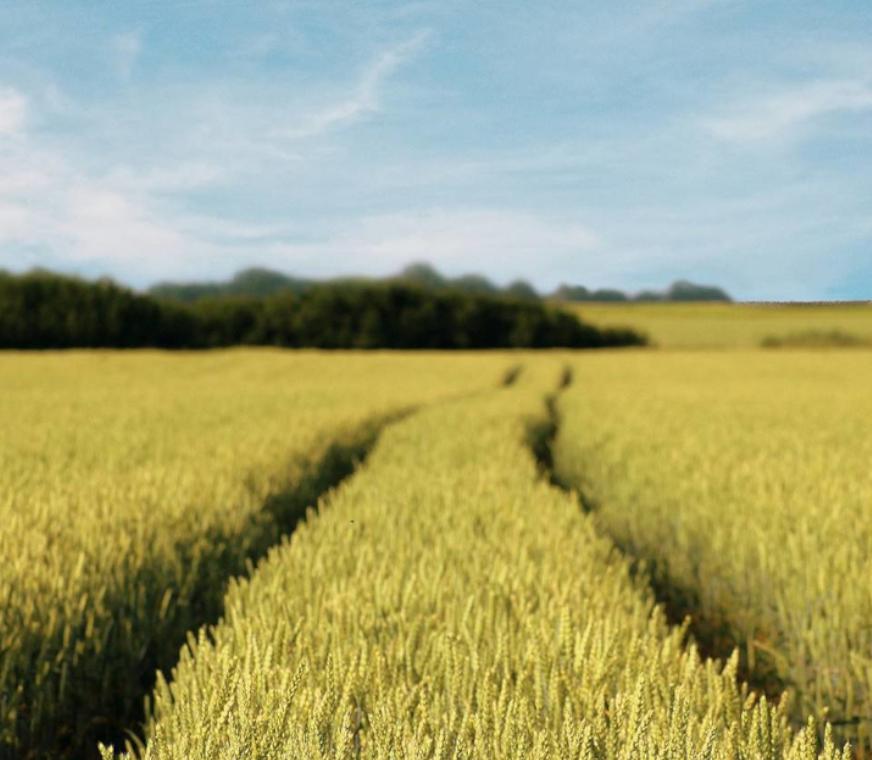 cereales-FR-banner.png