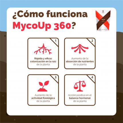 ESP-INFO-360-FUNCIONAMIENTO-01.png