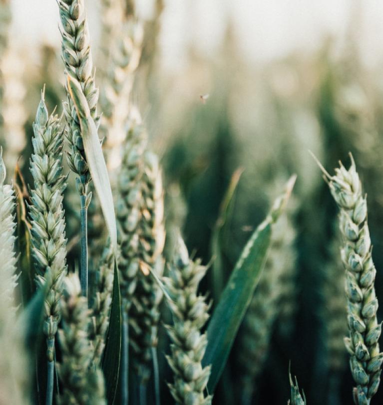 España 2030: agricultura sostenible y rentable