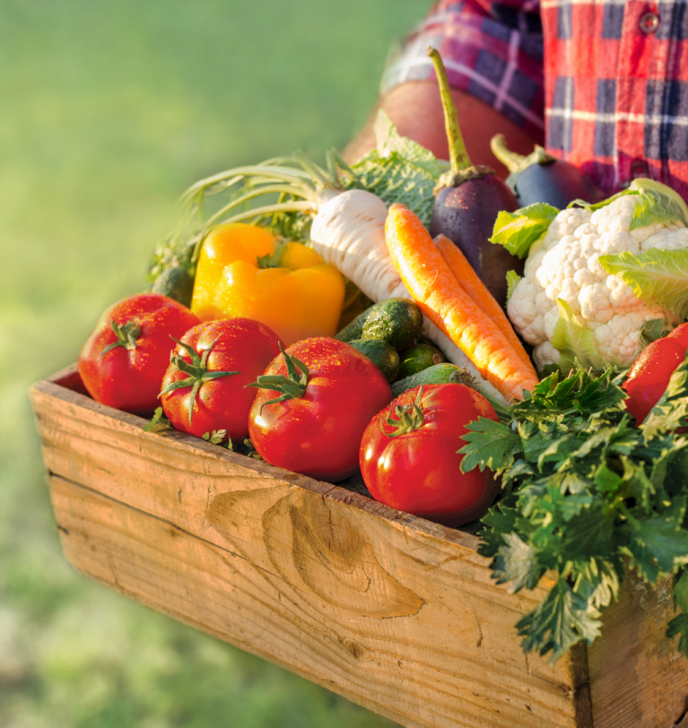 Microorganismos simbióticos: qué son y cómo usarlos para mejorar la calidad de las cosechas