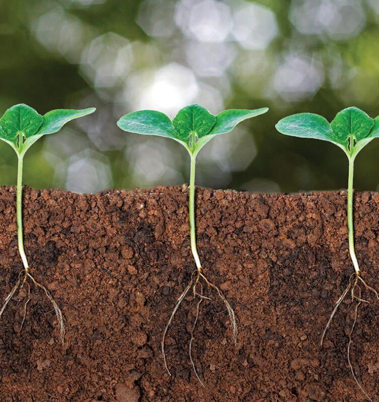 Microorganismos para incrementar la absorción de nutrientes