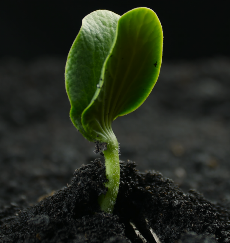 Symborg launches Qlimax, the new soil energizer that boosts microbial flora