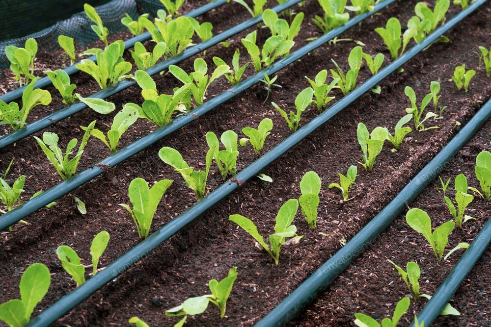 riego-goteo-plantas.jpg