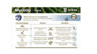 Mycoup Vigne FR