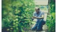 Efecto de la inoculación de plantas de pimiento cultivadas sobre fibra de coco